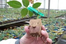 Espuma Fenólica para Plantio placa com 180 células de 2,5x2,5x3,8 cm