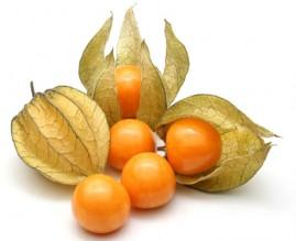 Fisális - A fruta dos Andes 200 sementes