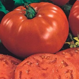 Tomate Gaucho 2,5g (sementes)