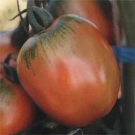 Tomate Santa Cruz Kada Gigante 2,5g
