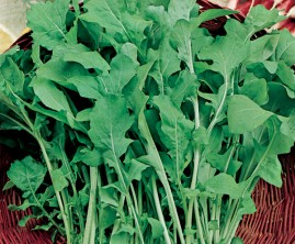 Rúcula Cultivada 50g de Sementes