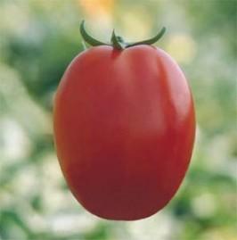 Tomate Santa Adelia 2,5g (sementes)